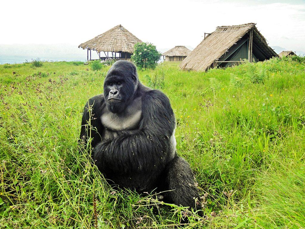 Africa Park Virunga