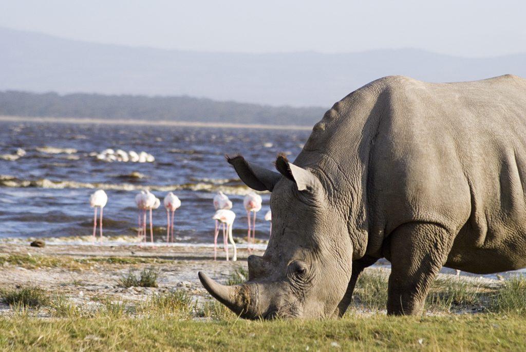 Africa Parks